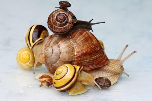 image d'un escargot qui porte sur son dos d'autres petits escargots pour illustrer la stratégie de marque employeur