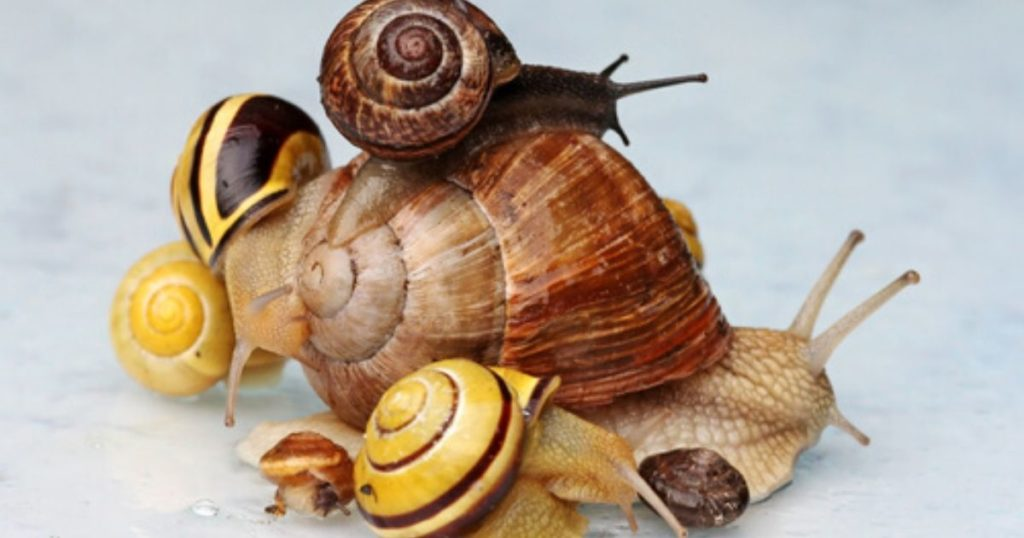 escargot portant sur son dos d'autres escargots pour illustrer l'engagement collaborateur