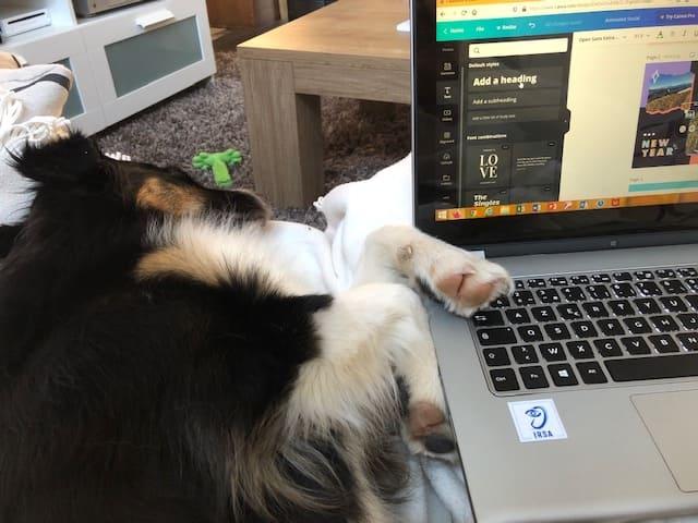 Chien avec un ordinateur